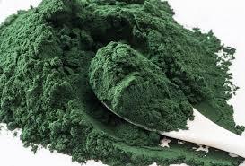 Image result for blue green algae