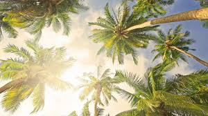 palm tree desktop backgrounds