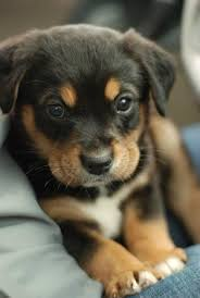 cute puppy. Brilliant Cute Cute Puppy Sitting On Couch Click The Pic For More Awww In Puppy
