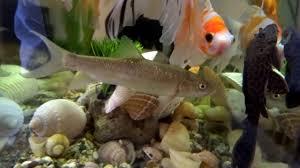 Wallpapers Fish Tank 3d Fish Aquarium 21 9 Live Wallpaper 1080p