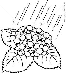 あじさい 雨 白黒線画ぬり絵のイラスト素材 29750406 Pixta