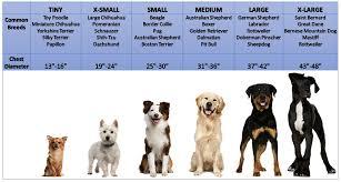 dog breed size chart dog breed sizes chart dolap magnetband co