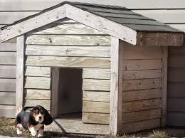 Creative Dog House Design Ideas   Pictures   RemoveandReplace comCreative Dog House Design Ideas