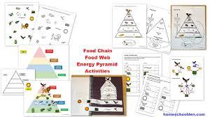 food web pyramid food chain food web energy pyramid activities biology packet