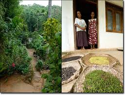Small Picture Letters from Sri Lanka Sarvodayas Home Gardens The