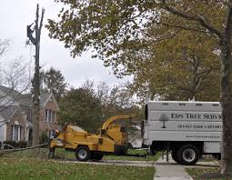 Ask These Top 5 Questions Before Hiring an Adelphi Tree Removal Company -  Ed's Tree Service