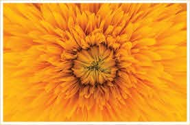 30 types of yellow flowers ftd com