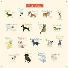dog chart dog chart canvas wall decal