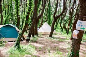 ビーチ目の前初心者も安心の湘南柳島キャンプで夏を満喫 Trip Editor