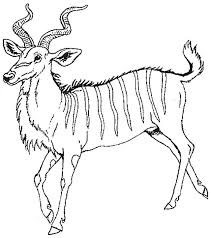Small Picture Antelope 34 Animals Printable coloring pages