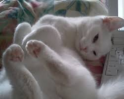 Image result for cat dressed as the sun
