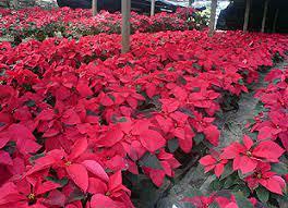 bayles garden center port washington