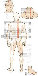Leg Acupressure Points Chart Acupuncture Points Chart Legs Best Picture Of Chart
