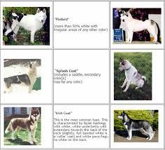 Husky Knowledge Www Huskies4love Com