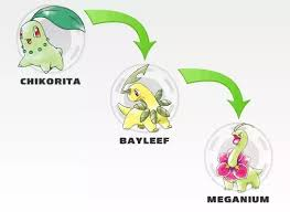 What Is The Evolution Chart Of Chikorita According To The