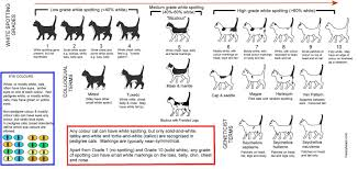 Colours Patterns In Cats Lots Of Detailed Printable