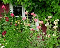 ROCK ROSE AN ENGLISH COTTAGE GARDEN TEXAS STYLECottage Garden Plans
