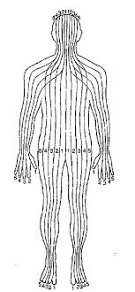 modern institute of reflexology Meridian Lines Body Map hand or ear was always associated with the body parts within the zone of its alignment fitzgerald identified ten zones which followed parallel lines meridian lines body map