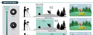 depth of field in photography explained