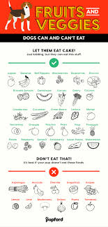 What Can Dogs Eat Chart 39 Vegetables And Fruits Dogs Can Eat And Cant Eat