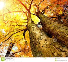 Fall Images Free Autumn Trees Stock Photo Image Of Forest Autumn Environment