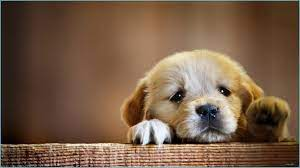 HD Puppy Wallpapers - Top Free HD Puppy ...