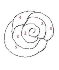 Rose Semplici Da Disegnare Playingwithfirekitchencom