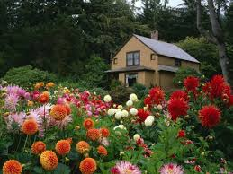 flowers for garden. Outdoors Flowers And Gardens In House Inspirations Home Garden Backyard Flower Landscaping . Beautiful For
