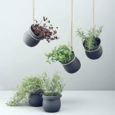 indoor garden ideas hang your plants from the ceiling walls matte black plant wall hangers important