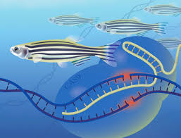 Genome Editing Genome Editing National Human Genome Research Institute Nhgri