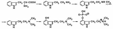 Image result for Psilocybin SYNTHESIS