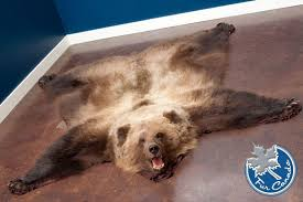 Featured Blanket Bear Skin With Head  Grizzly Bear Rugs