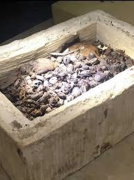 в египте нашли редкие мумии кошек и скарабеев в 7 гробницах возле