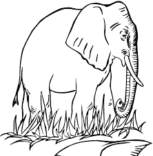 Small Picture Unique Elephant Coloring Pages Best Gallery Co 610 Unknown