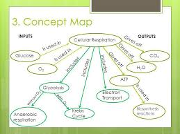 Chapter 8 Photosynthesis And Respiration Concept Mapping Venn Diagram Answers Chapter 8 Photosynthesis And Respiration Concept Mapping