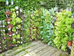 indoor tomato garden. Indoor Vegetable Garden Design \u2013 Great Fascinating Tomato Gardening With Storage Ideas