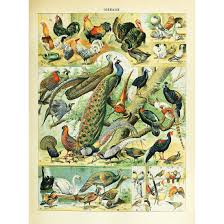 Amazon Com Meishe Art Vintage Poster Print Colorful Birds