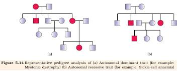A Pedigree Is A Chart That Shows How Can I Confirm That The Given Pedigree Chart Is Of An