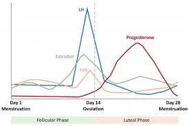 Normal Menstrual Cycle Intechopen