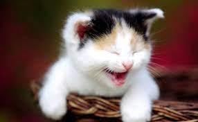 Cute Smiling Cat Wallpaper Hd