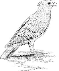 Small Picture 40 Bird Coloring Pages ColoringStar