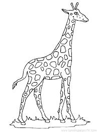 Giraffe Coloring Sheet Coloring Giraffes Coloring Pages Giraffe Page