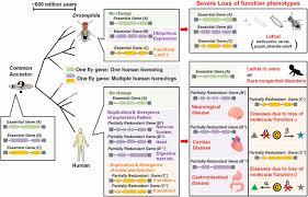 fruit flies in biomedical research genetics  figure
