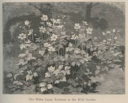 nineteenth century american seed companies endorsed english garden writer william robinson