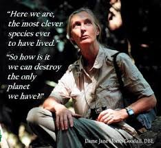 These 40 Quotes From Jane Goodall Will Unleash Your Wild Heart Awesome Jane Goodall Quotes