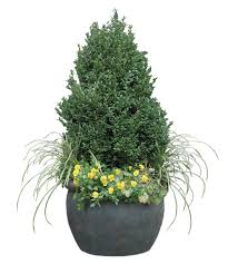 432 Best Patio And Container Gardening Images On Pinterest Container Garden Ideas For Winter