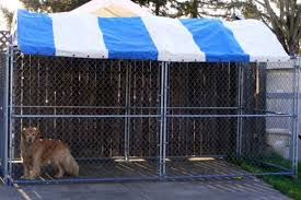 fenced dog runs are available with weather resistant uv treated tops