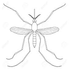 昆虫リアルな蚊アカイエカ成虫蚊シルエット蚊は白い背景で隔離 塗り絵の蚊デザイン