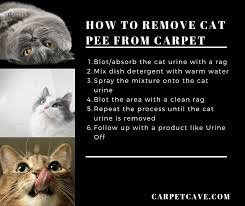 how to remove cat slime and water