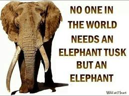 Elephant Quotes Magnificent Elephant Quotes Elephant Sayings Elephant Picture Quotes